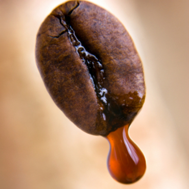 Drop of coffee dripping from coffee seed. Shallow depth of field.